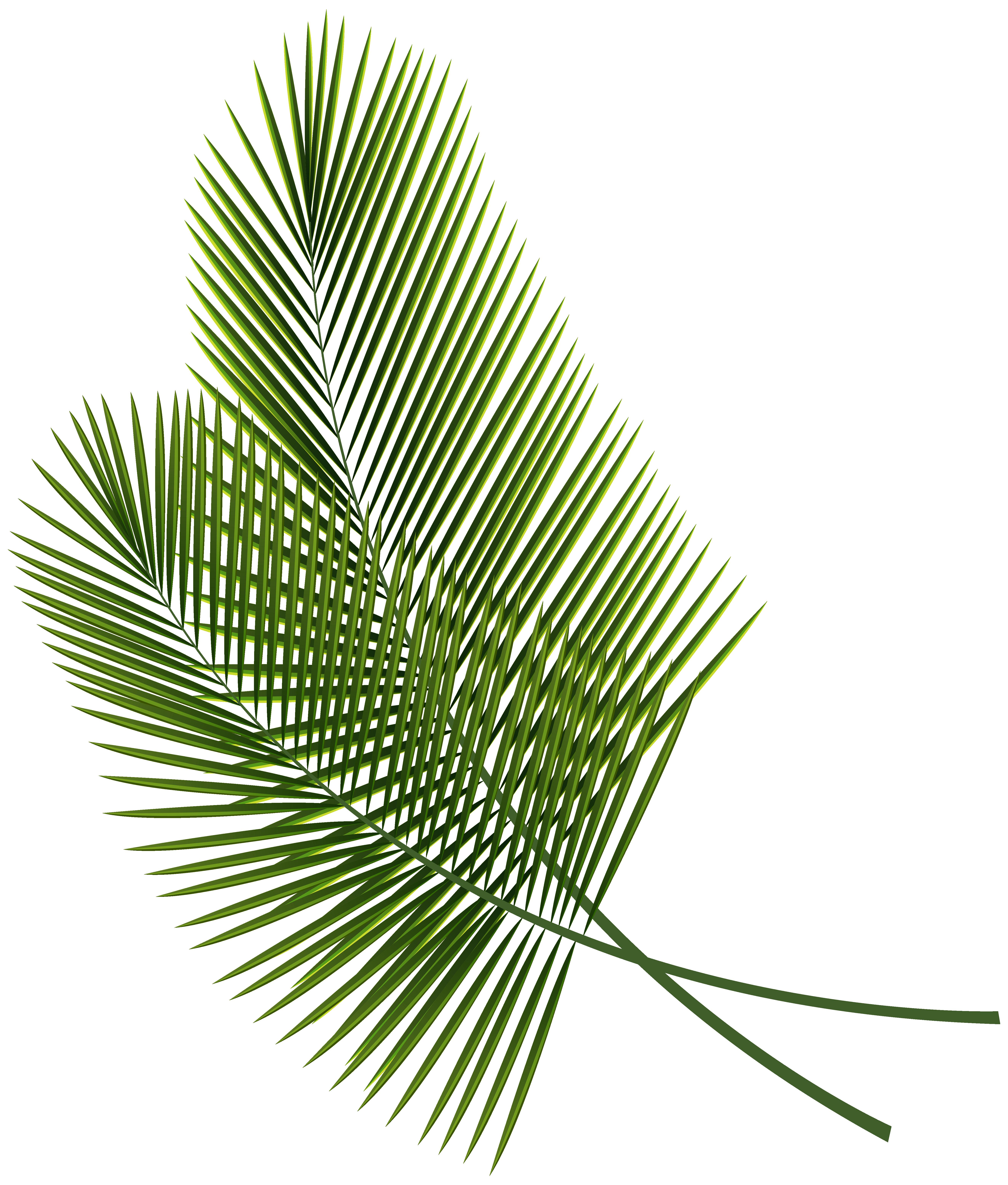 5295x6226 Leaf Arecaceae Palm Branch Clip Art