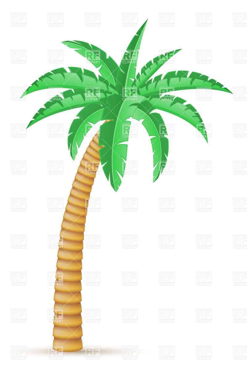 800x1200 Tropical Palm Tree Isolated On White Background Vector Image