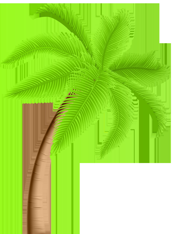 4446x6000 Palm Tree Png Clip Artu200b Gallery Yopriceville
