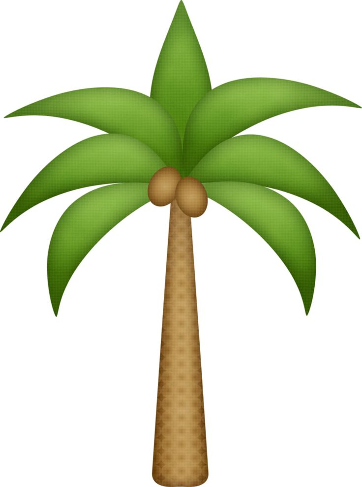 736x991 29 Best Palm Tree Clip Art Images On Palm Trees, Palms