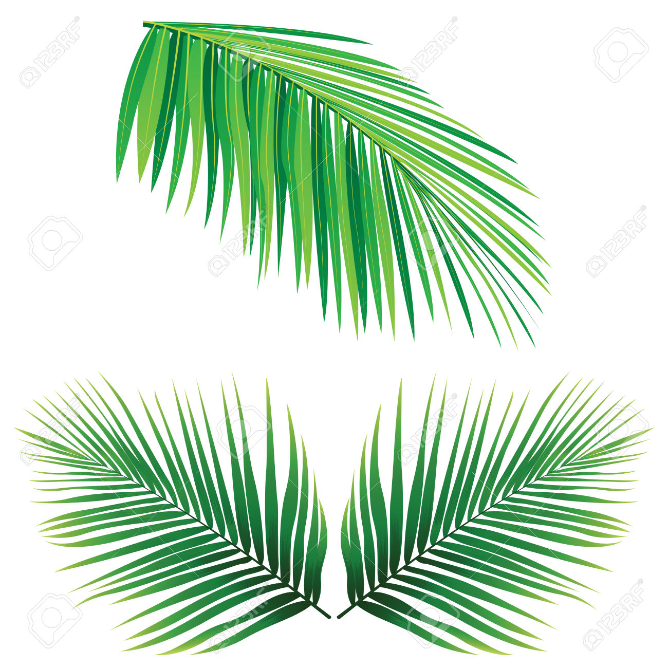 1300x1300 Coconut Leaf Clipart Amp Coconut Leaf Clip Art Images