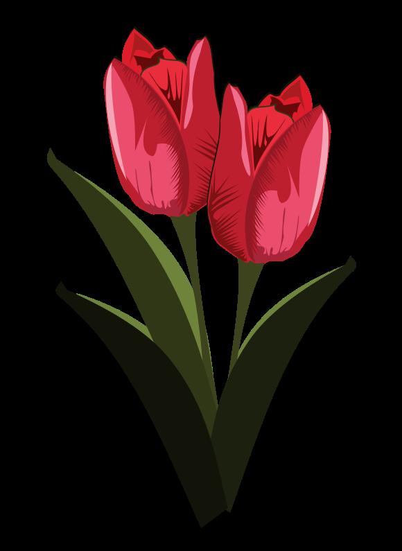 580x795 122 Tulip Flower Clipart Clipart Fans