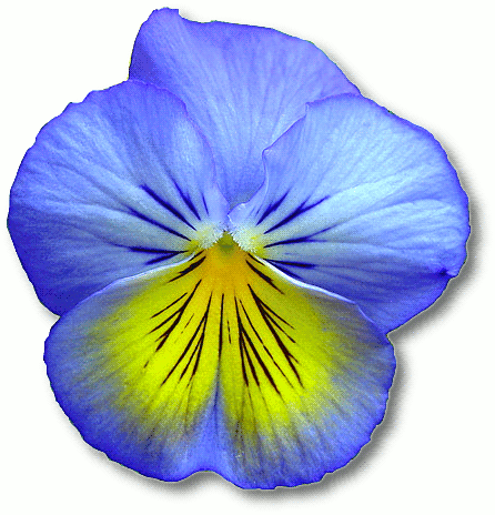 446x464 Blue Flower Clipart Flowerclip