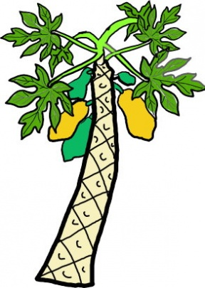 288x405 Papaya Tree Clipart