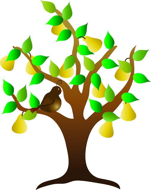 509x640 Trees With Fruits Clip Art