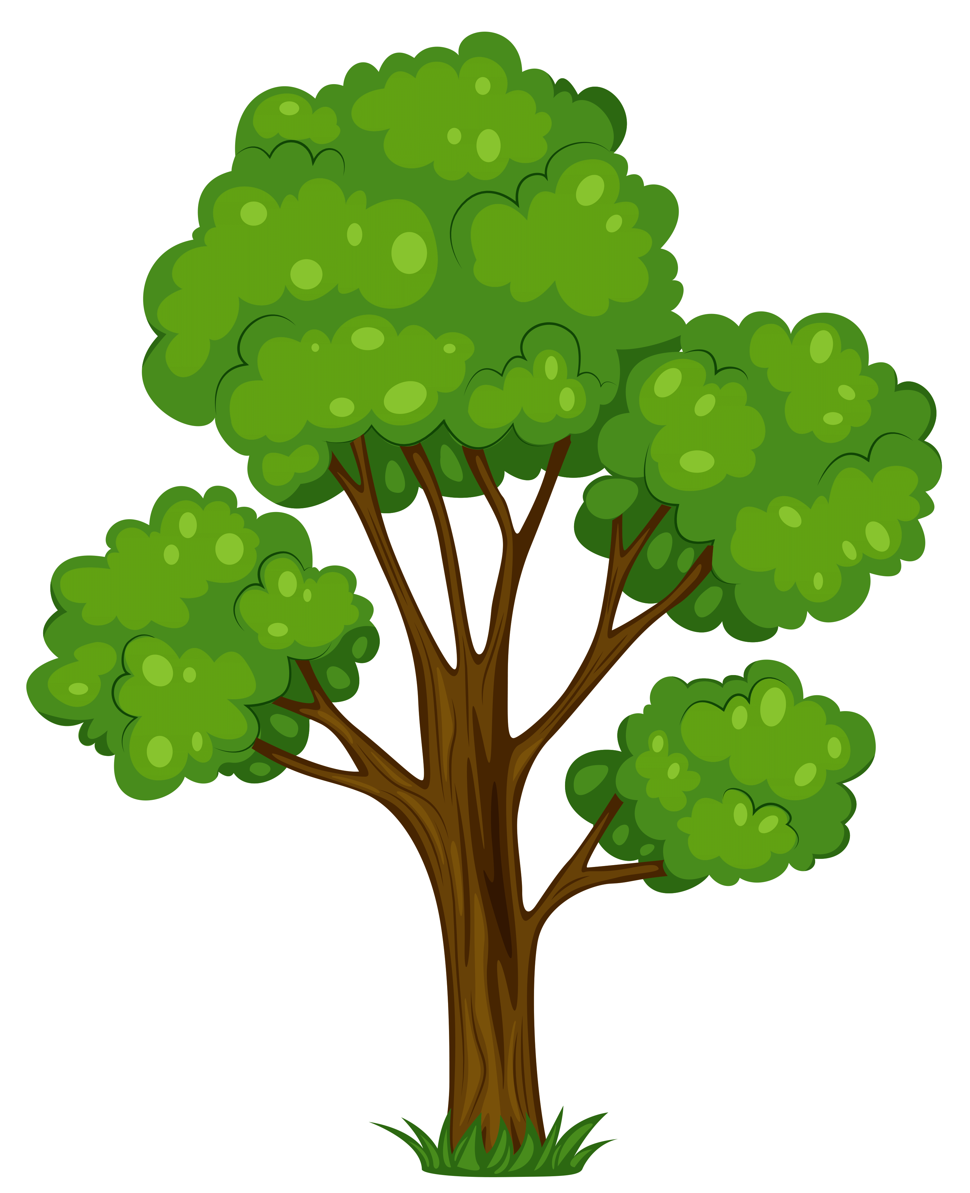 3126x3842 Avacado Tree Cliparts 175324
