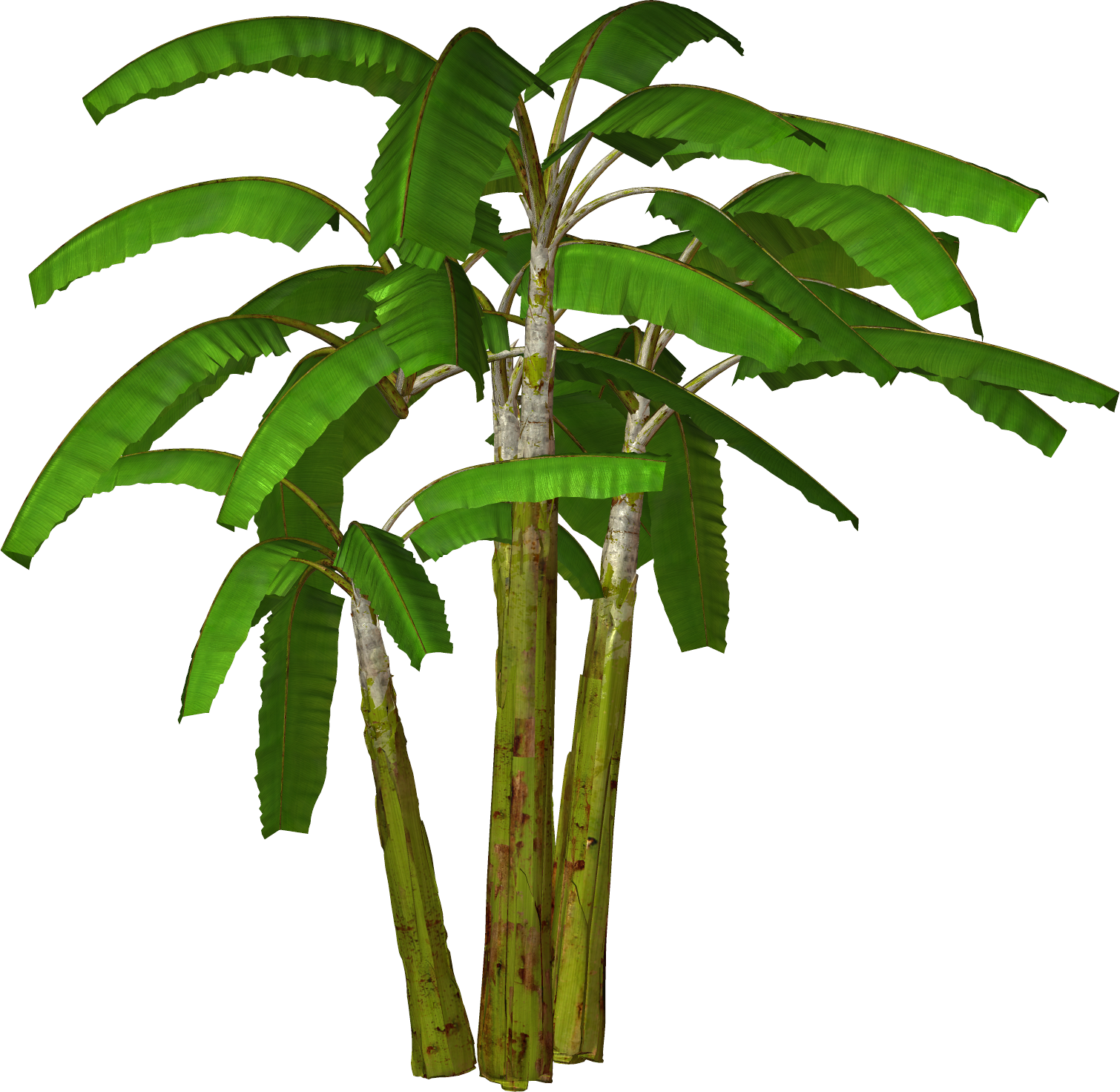 1510x1472 Banana Clipart Banana Tree