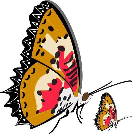 550x562 Papillon Clipart