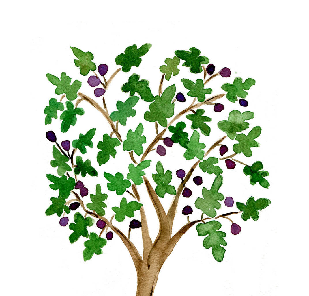 1071x1024 Clip Art Of Fig Tree Clipart Pencil And In Color