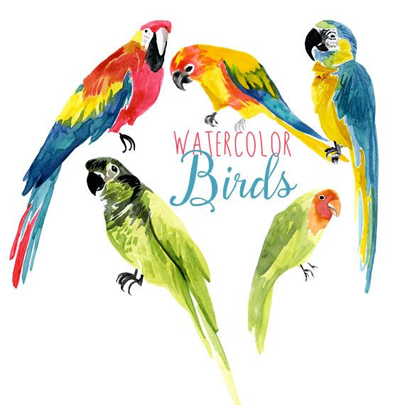 570x570 Watercolor Tropical Birds, Parrot Clip Art, Bird Clipart, Exotic