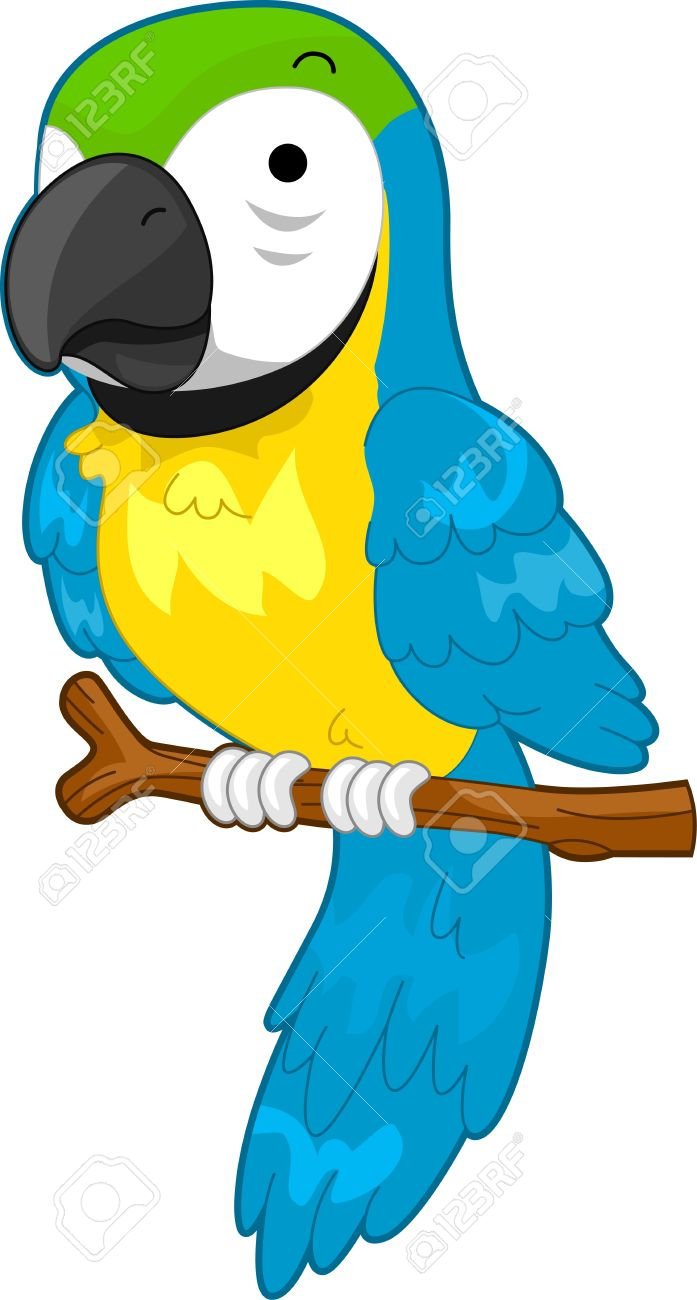 697x1300 Parrot Clipart Rainforest Parrot