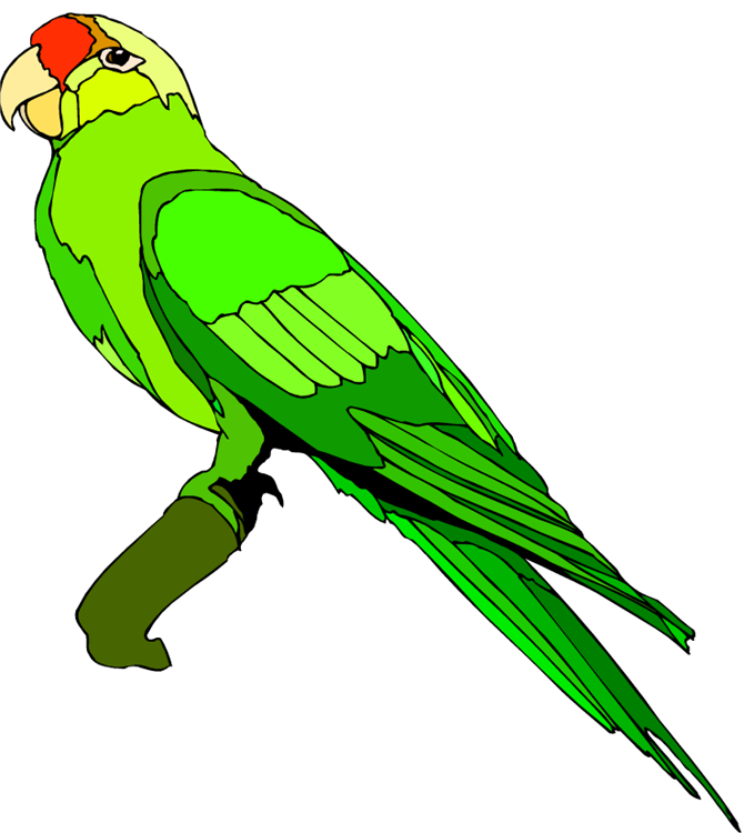 679x750 The Top 5 Best Blogs On Green Parrot Clip Art Images