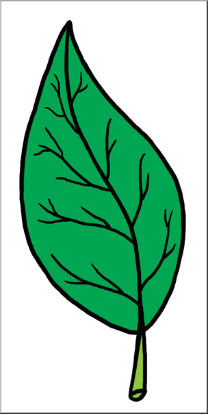 304x604 Clip Art Leaf Parts Color Unlabeled I Abcteach