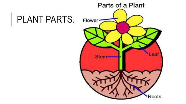 638x359 Lesson 2 How Do Plant Parts Help Plants