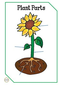 242x350 Pdf Plant Parts Flashcards With Qr Codes By Inspiring Teaching Design