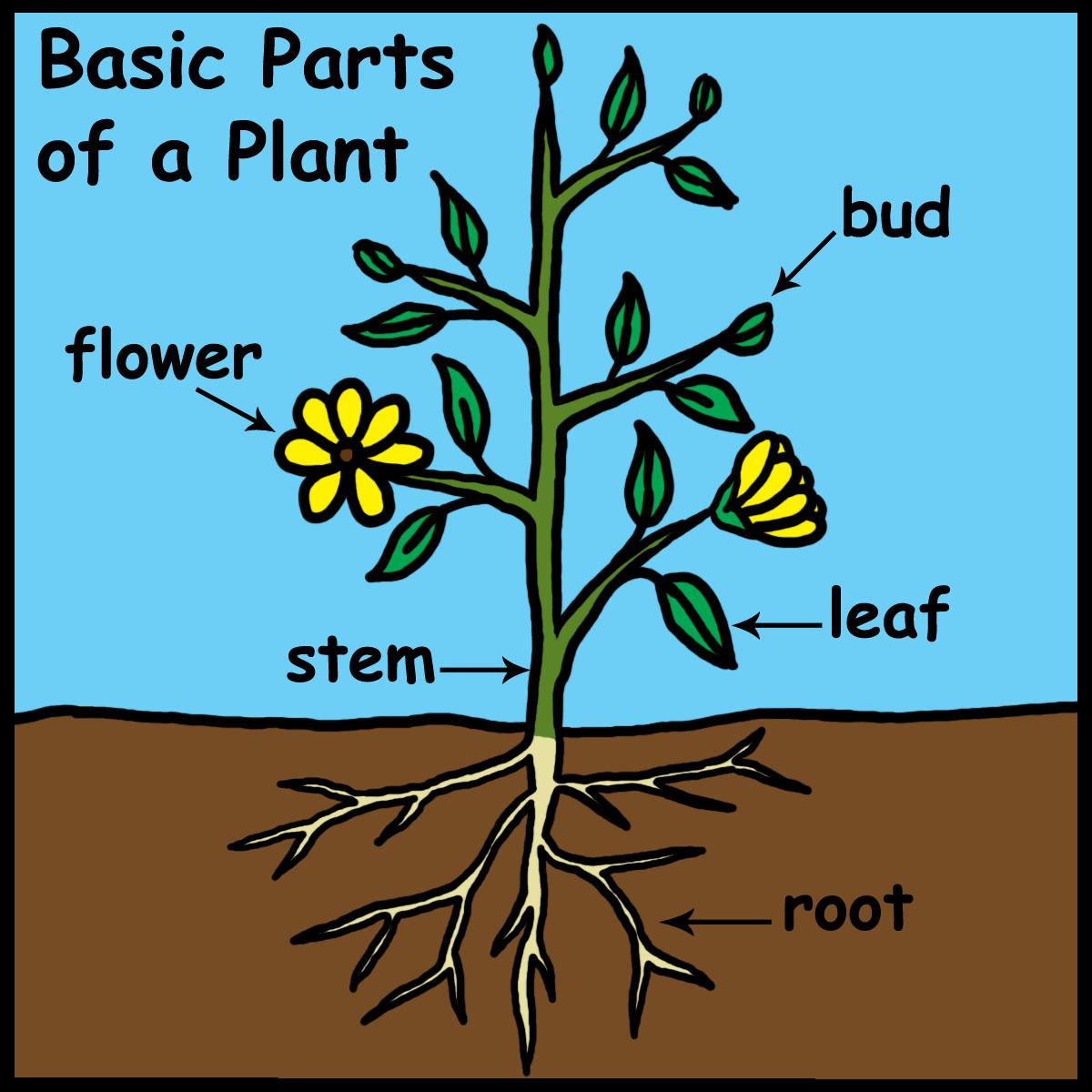 1200x1200 Plant Diagram Clipart