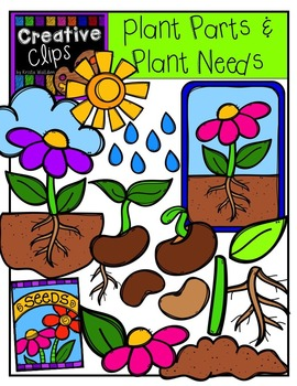 270x350 Plant Parts And Needs {Creative Clips Digital Clipart} Tpt