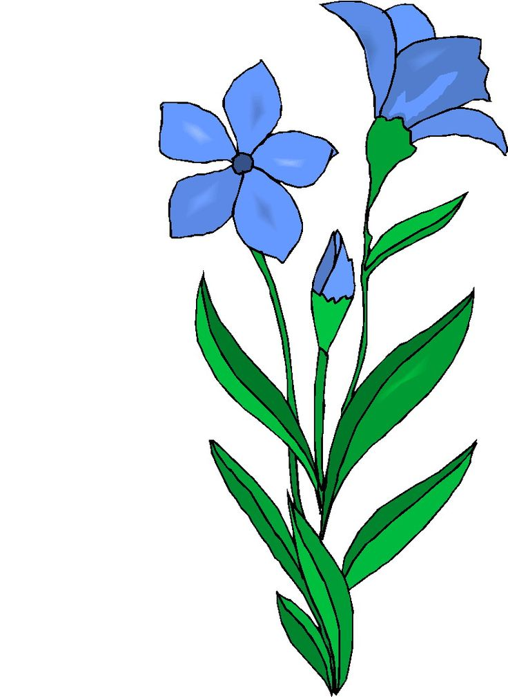 736x1009 69 Best Easy Drawings Images On Drawing Flowers