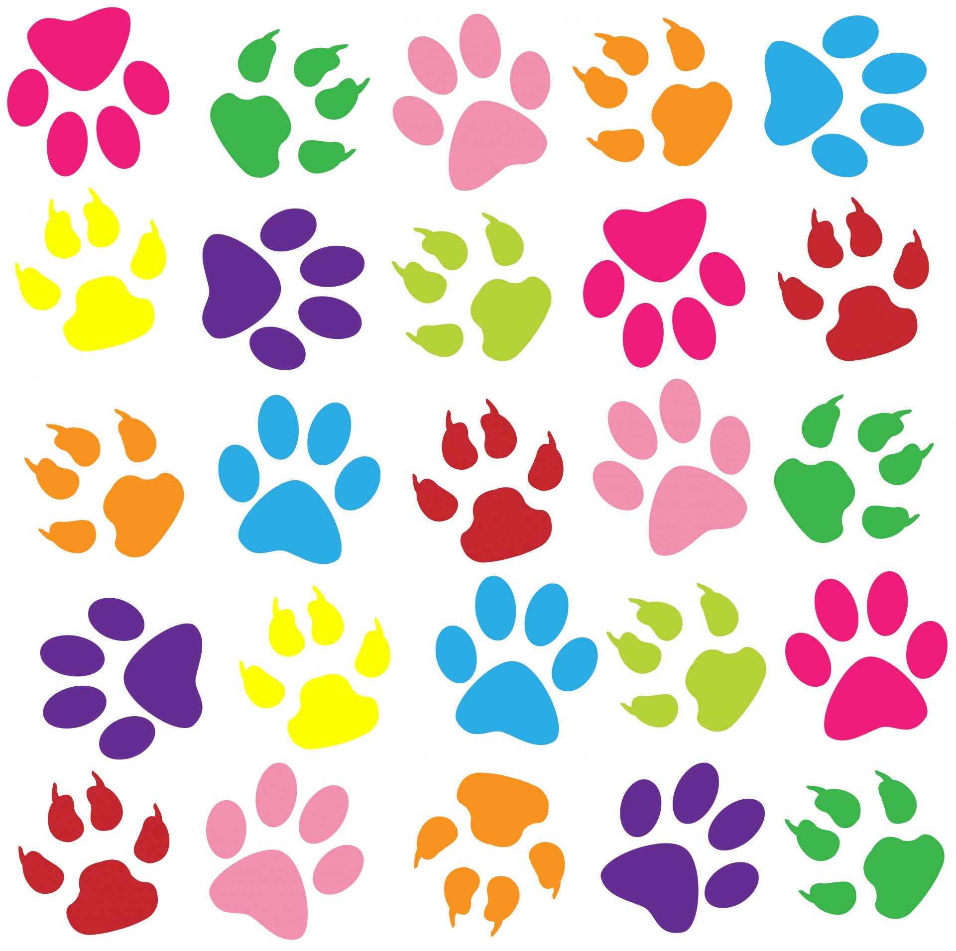 1920x1911 Animal Paw Prints Pictures