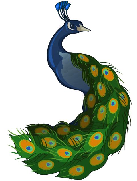 480x633 Peacock Clip Art