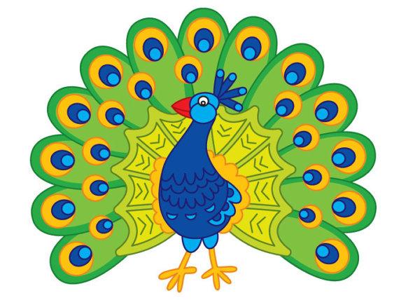 570x428 Peacock Clipart Digital Vector Peacock Feather Peafowl