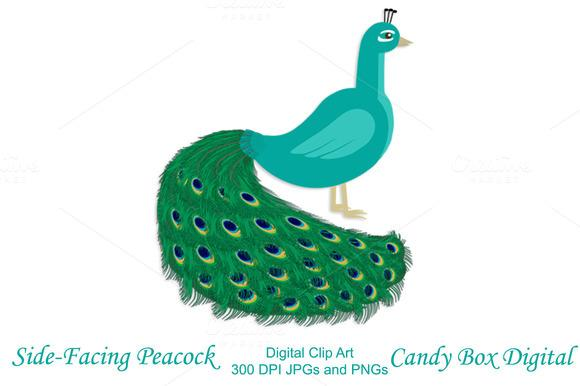 580x386 Free Peacock Images Clip Art