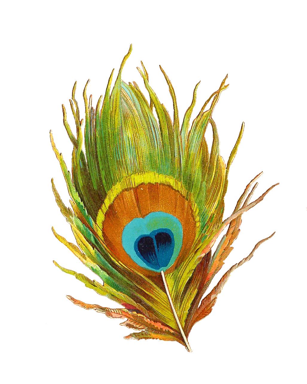 1027x1285 Peacock Feather Clip Art. Clipart Panda