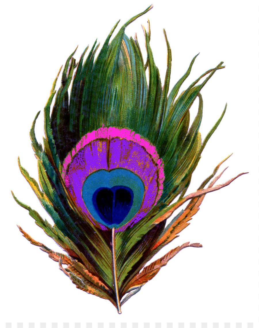 900x1140 Feather Bird Peafowl Clip Art