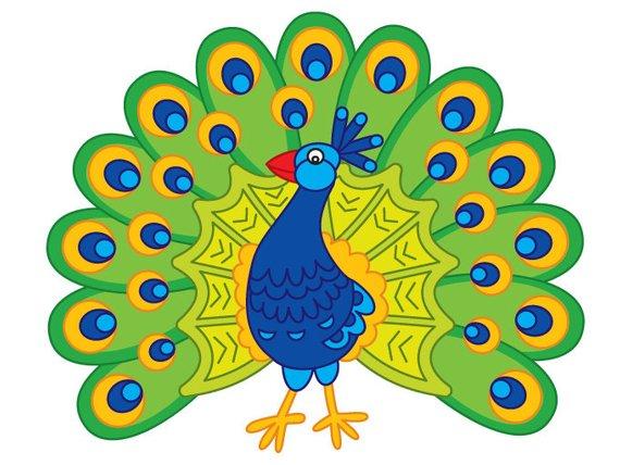 570x428 Peacock Clipart