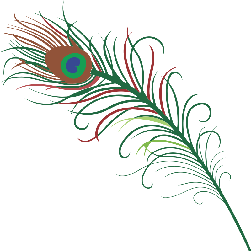 800x800 Peacock Feather Clipart Many Interesting Cliparts