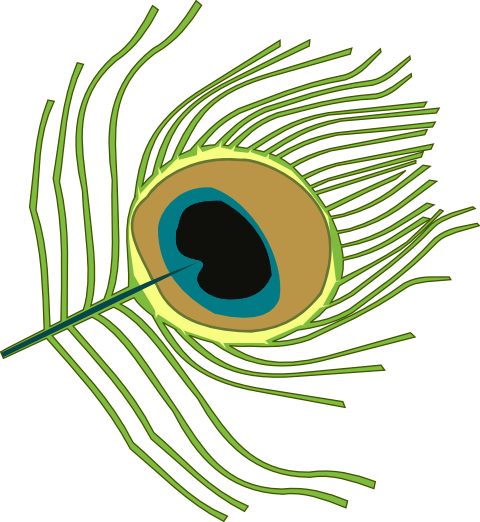 480x522 Peacock Feather Clipart