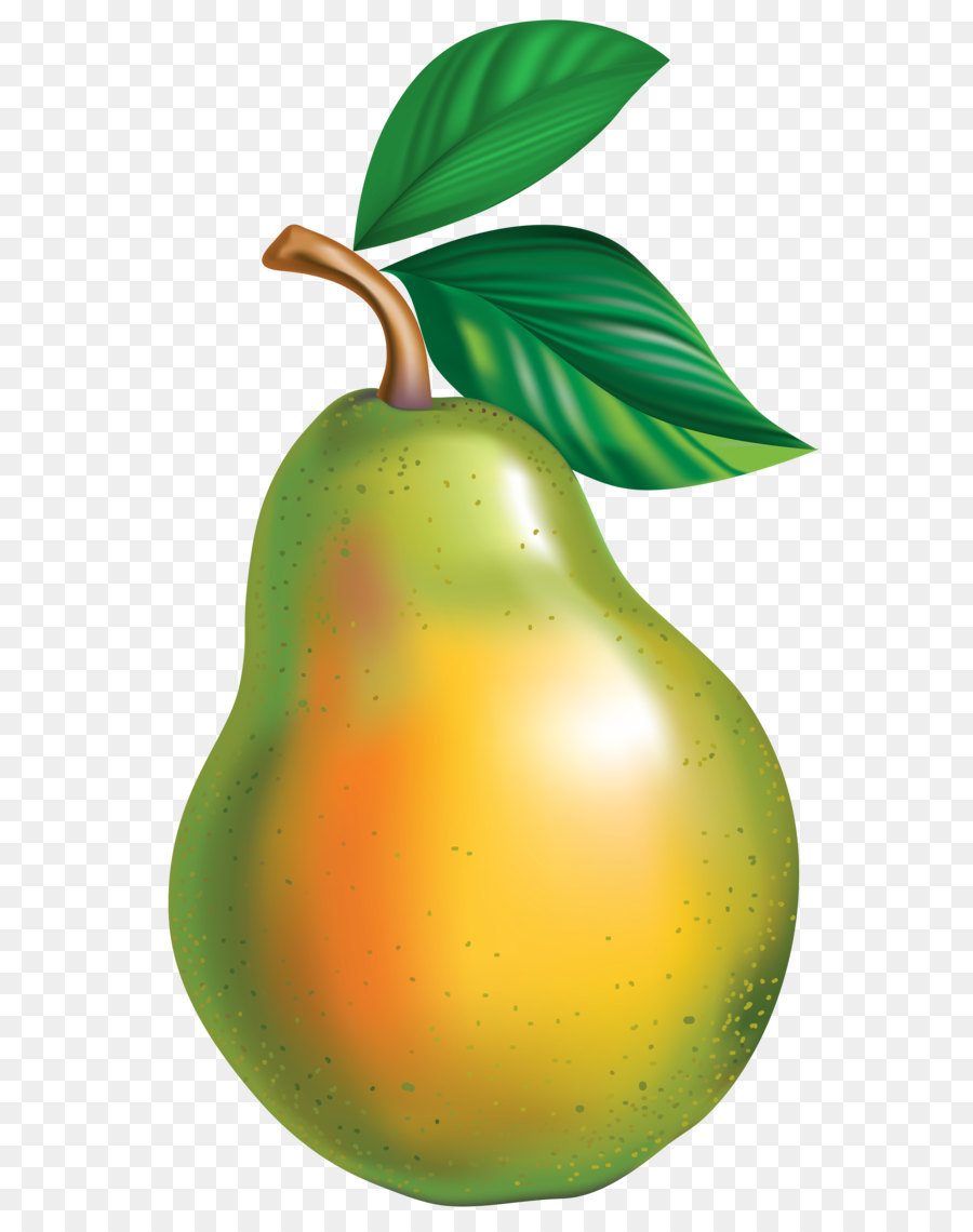 900x1140 Pyrus Bretschneideri Asian Pear Clip Art