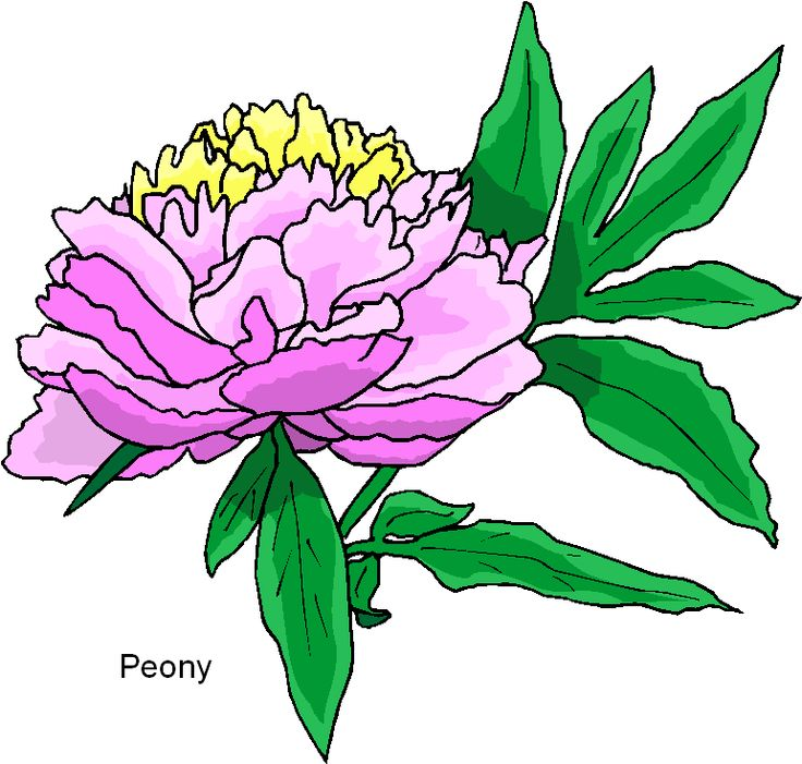 peony clipart at getdrawings com free for personal use peony rh getdrawings com penny clipart peony clipart black and white