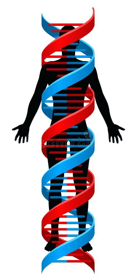 443x900 Double Helix Clip Art Model Of Human Double Helix Vector