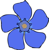 158x160 Flower Top View Clipart