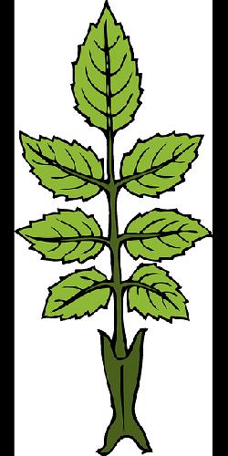 250x500 Outline Leaf Plant Leaves Laurel With Good Periwinkle Leaf Clip