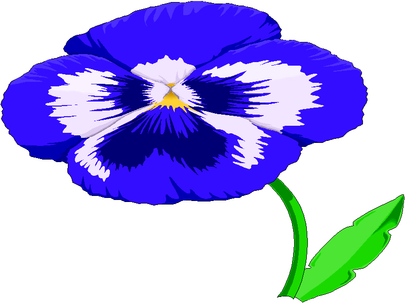 800x600 Pansy Clipart