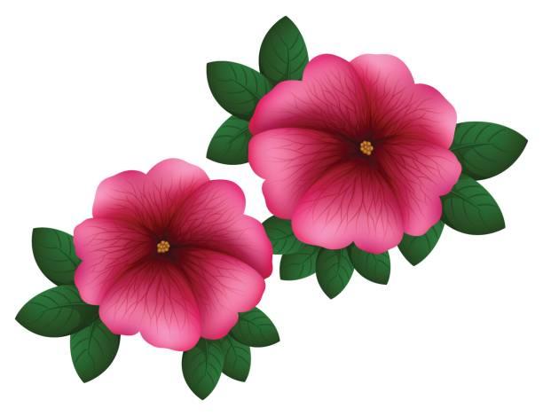 612x469 Petunia Clipart Pretty Flower 3782498