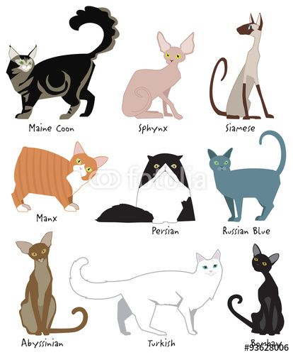 414x500 Vector Colorful, Cute Illustrations Of The Most Popular Cat