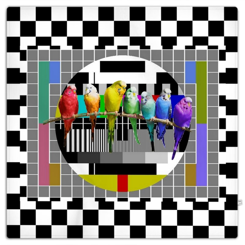 800x800 Test Card And Rainbow Budgies Picnic Blanket
