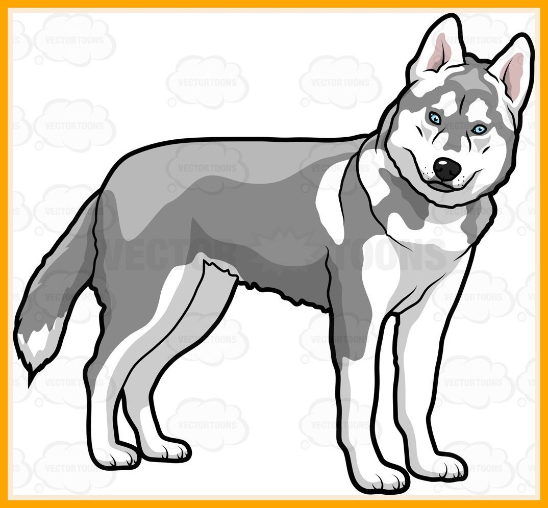 1074x996 Unbelievable Shining Husky Dog Clipart Black And White Pencil