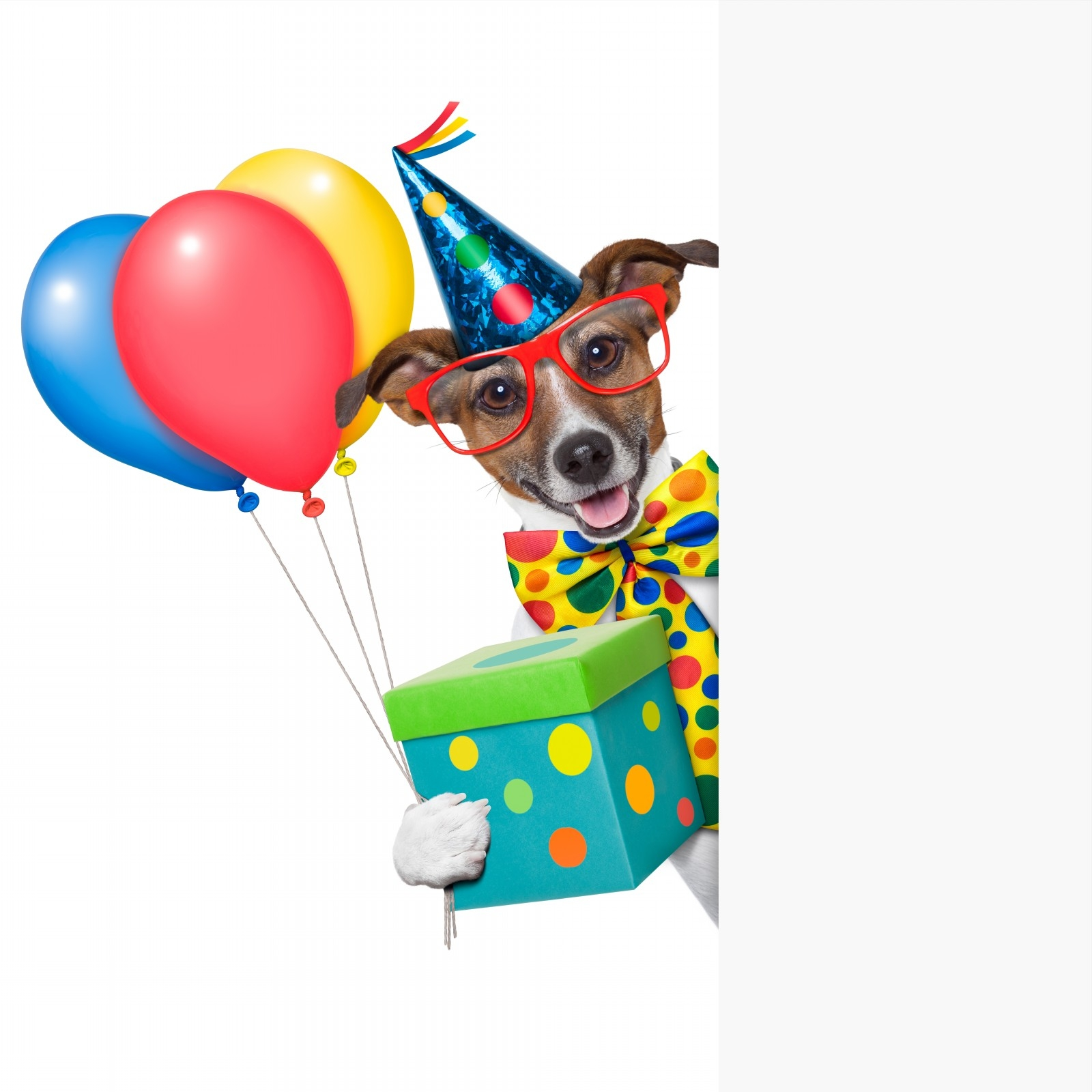 1600x1600 Birthday Dog Clipart Clip Art Images New With Dogs
