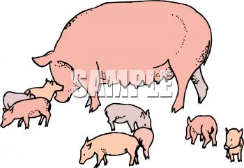 350x241 Mama Pig With Her Babies