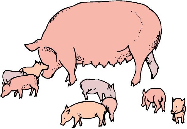 628x434 Free Pig Clipart