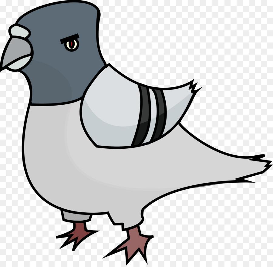900x880 Domestic Pigeon Clip Art