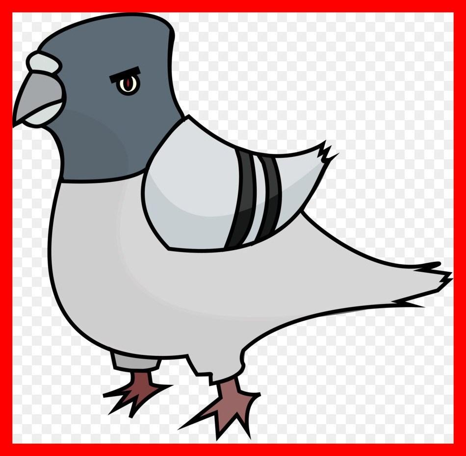 950x930 Astonishing Domestic Pigeon Clip Art Clipart Png Of Popular
