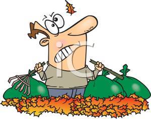 300x237 A Frustrated Man Holding A Broken Rake In A Pile Of Leaves