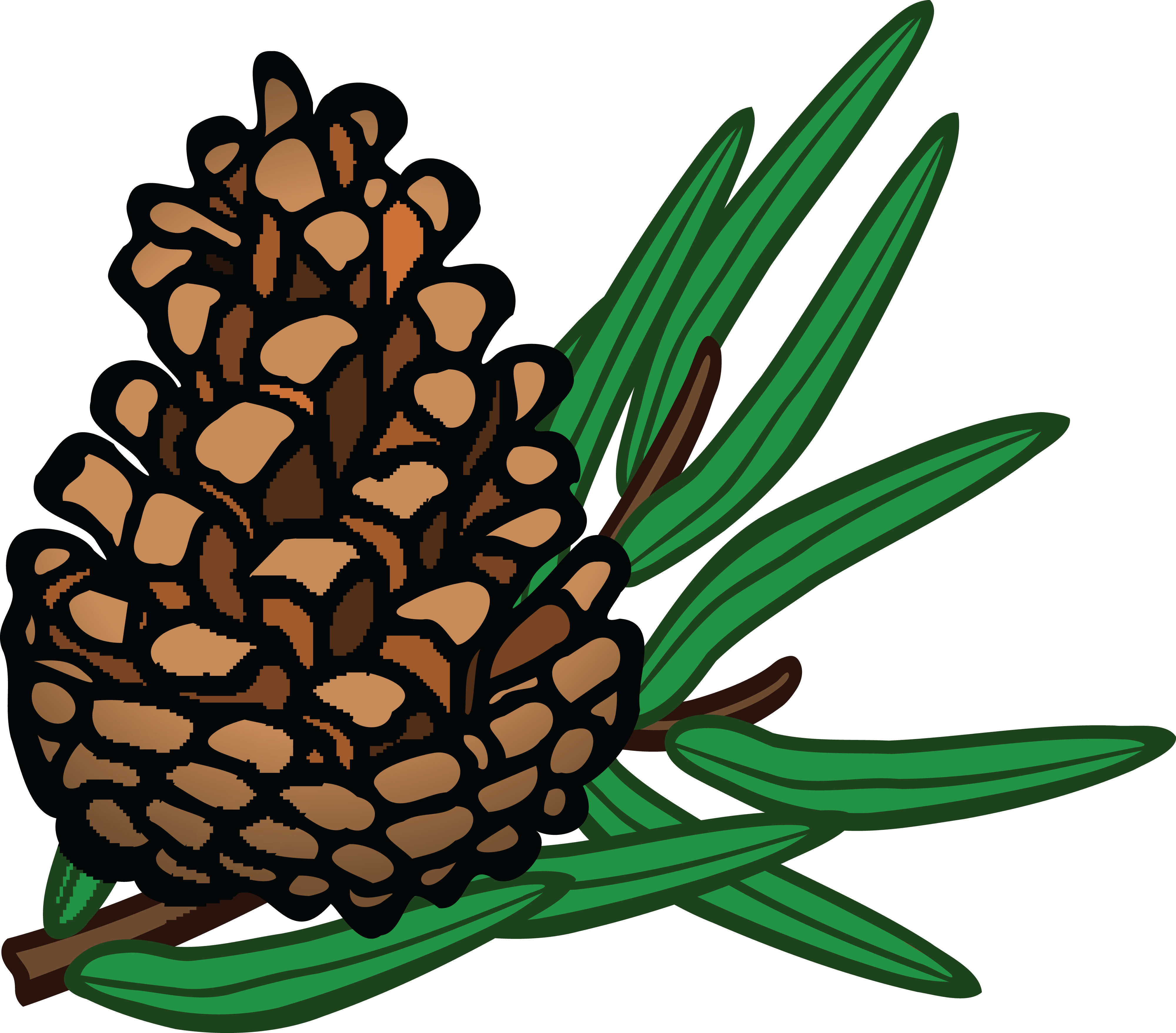 4000x3514 Free Clipart Of A Pinecone