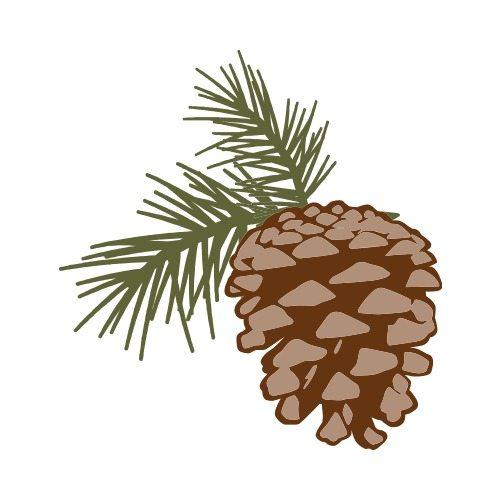 500x500 Pine Cone C Clip Art