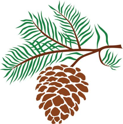 413x416 Pine Cone Clip Art, Vector Images Amp Illustrations